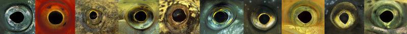 olhos de peixes